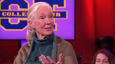 College Tour in de klas: Jane Goodall