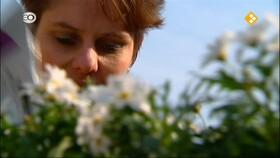 Afbeelding van aflevering: Simone