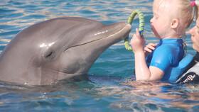 Afbeelding van aflevering: Emma krijgt hulp van dolfijnen