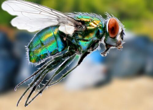 Vrolijke kunst, de zeldzame vlieg en een vuilnisbak vol voedsel