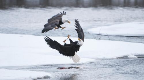 Natuur op 2: Wild Alaska - Winter (3/3)