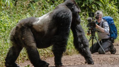 De gorillafamilie en ik (1/2)