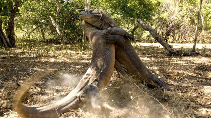 Afbeelding van aflevering: Life (2) - Reptielen en amfibieën