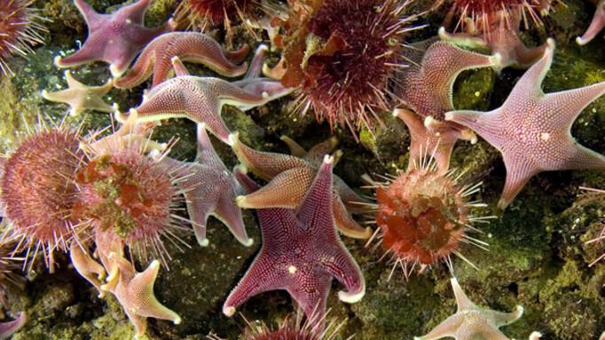 Afbeelding van aflevering: Life (8) - Dieren uit de diepzee