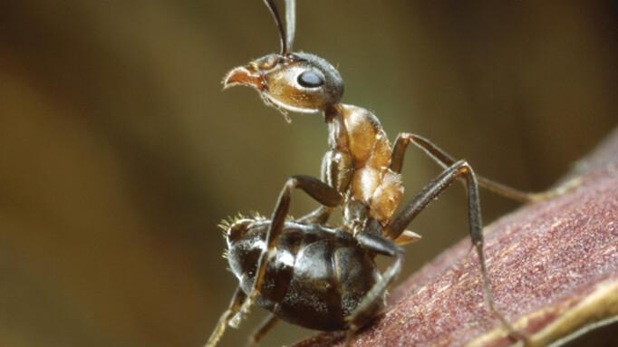 Afbeelding van aflevering: Life (6) - Insecten