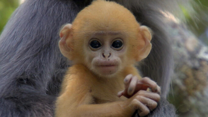 Afbeelding van aflevering: Life (10) - Primaten