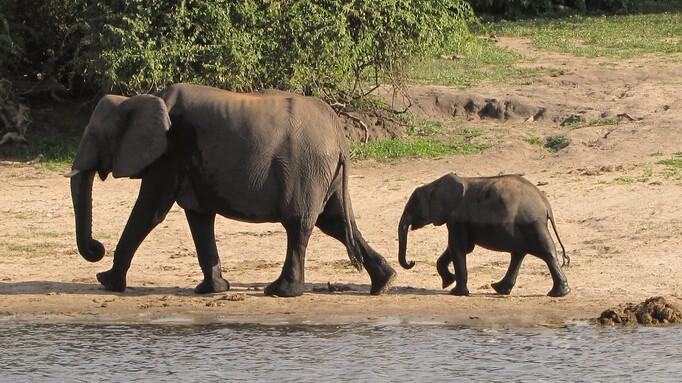Afbeelding van aflevering: Okavango (3/3)