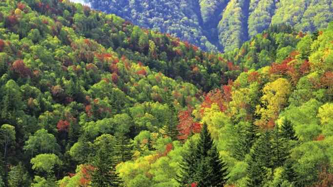 Afbeelding van aflevering: Bijzondere bossen (10/11)