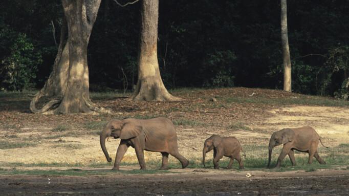 Afbeelding van aflevering: Jungles (8/11)