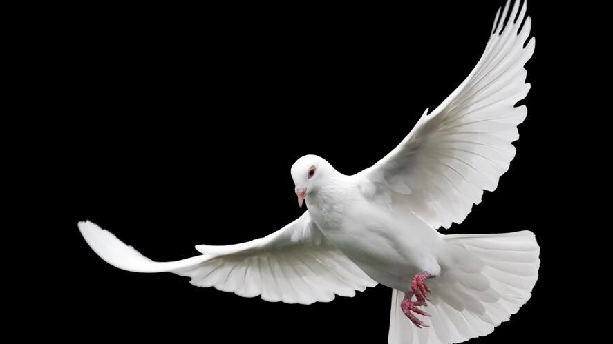 Afbeelding van aflevering: Ik merk weinig van de Heilige Geest