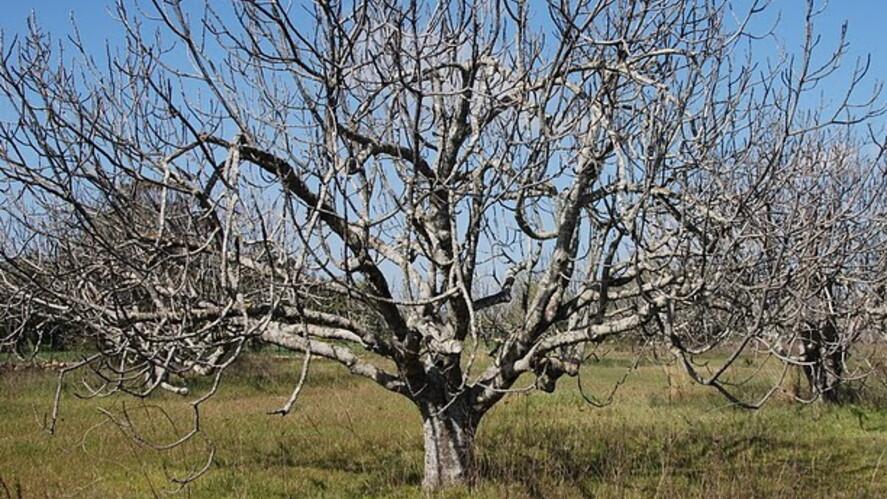 Afbeelding van aflevering: Het oordeel over de vijgenboom