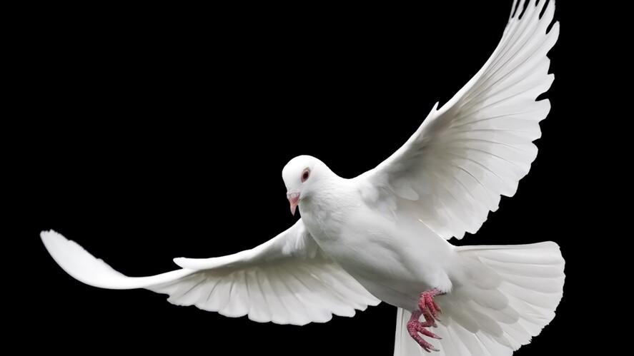 Afbeelding van aflevering: De kracht van de Heilige Geest