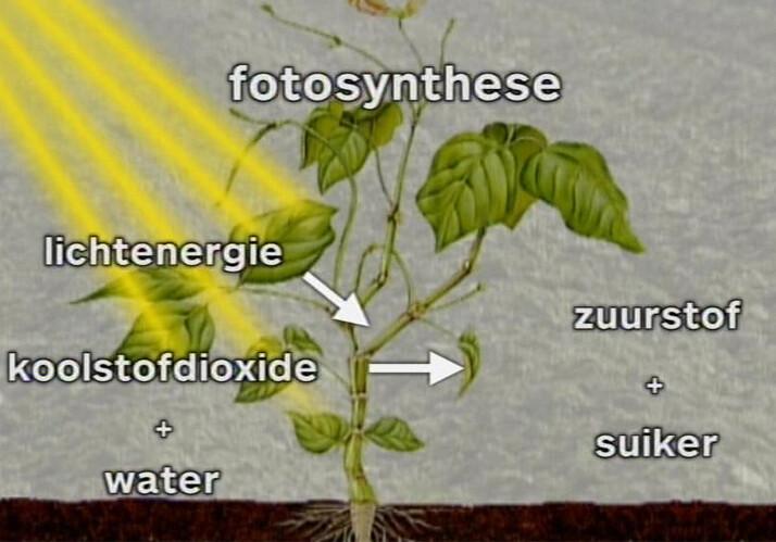 Verbazingwekkend Schooltv: Fotosynthese - Hoe een plant glucose en zuurstof maakt CQ-08