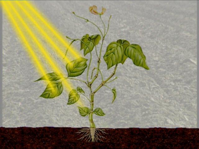 Betere Schooltv: Fotosynthese - Een plant maakt zijn eigen voedsel MX-86