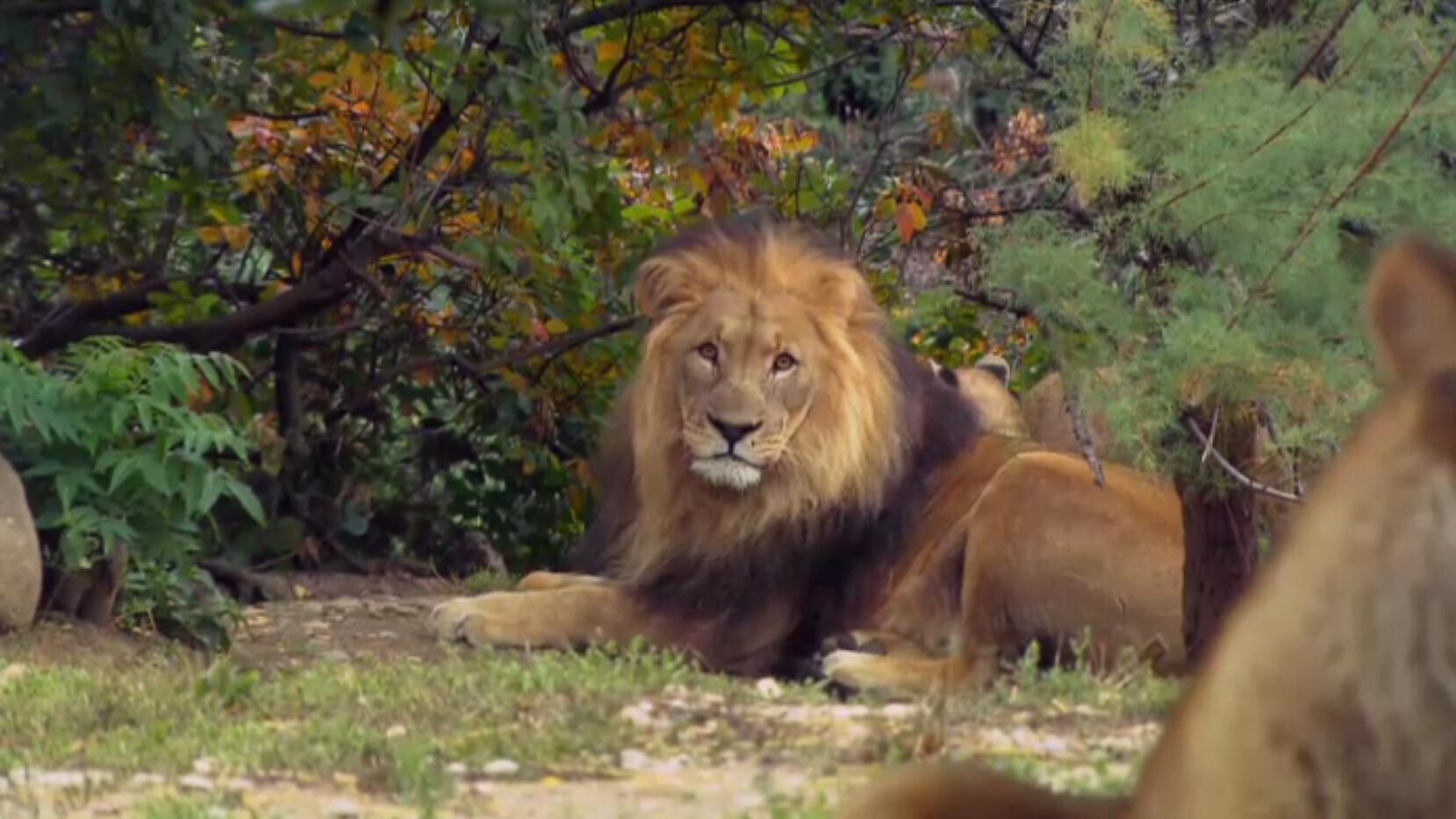 Schooltv Hoe Jaagt Een Leeuw Verstoppen En Samenwerken