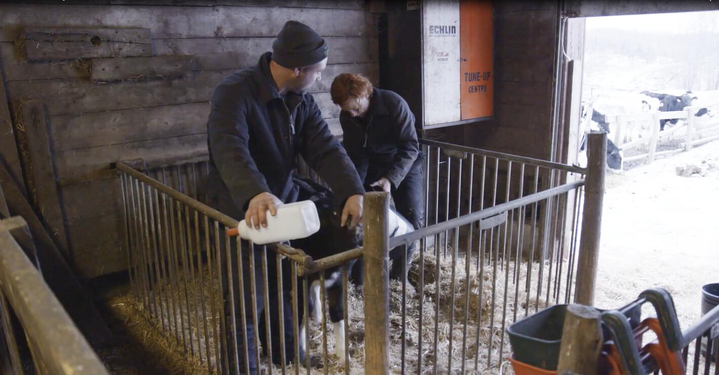 De kalfjes krijgen melk bij Riks in Canada