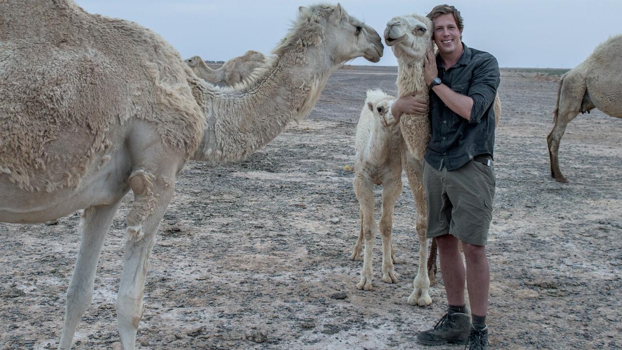 Freeks Wilde Wereld - Witte Ijshelden
