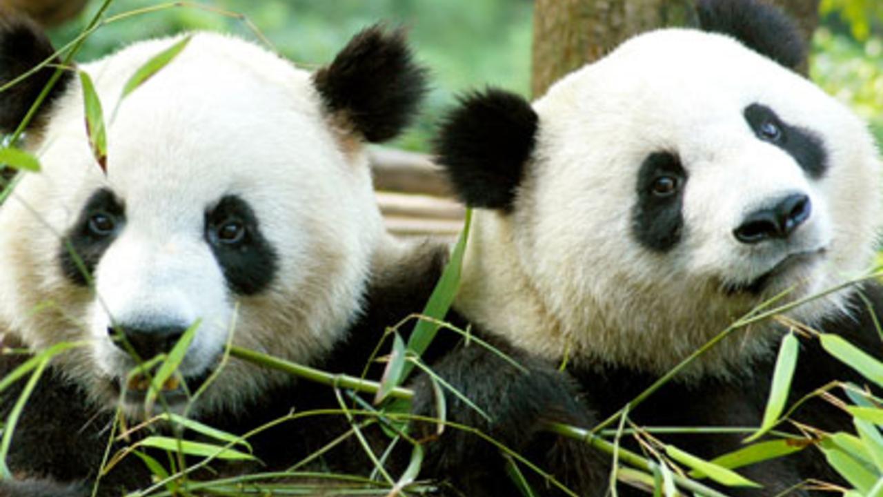 Welkom Wu Wen & Xing Ya - Welkom Wu Wen & Xing Ya