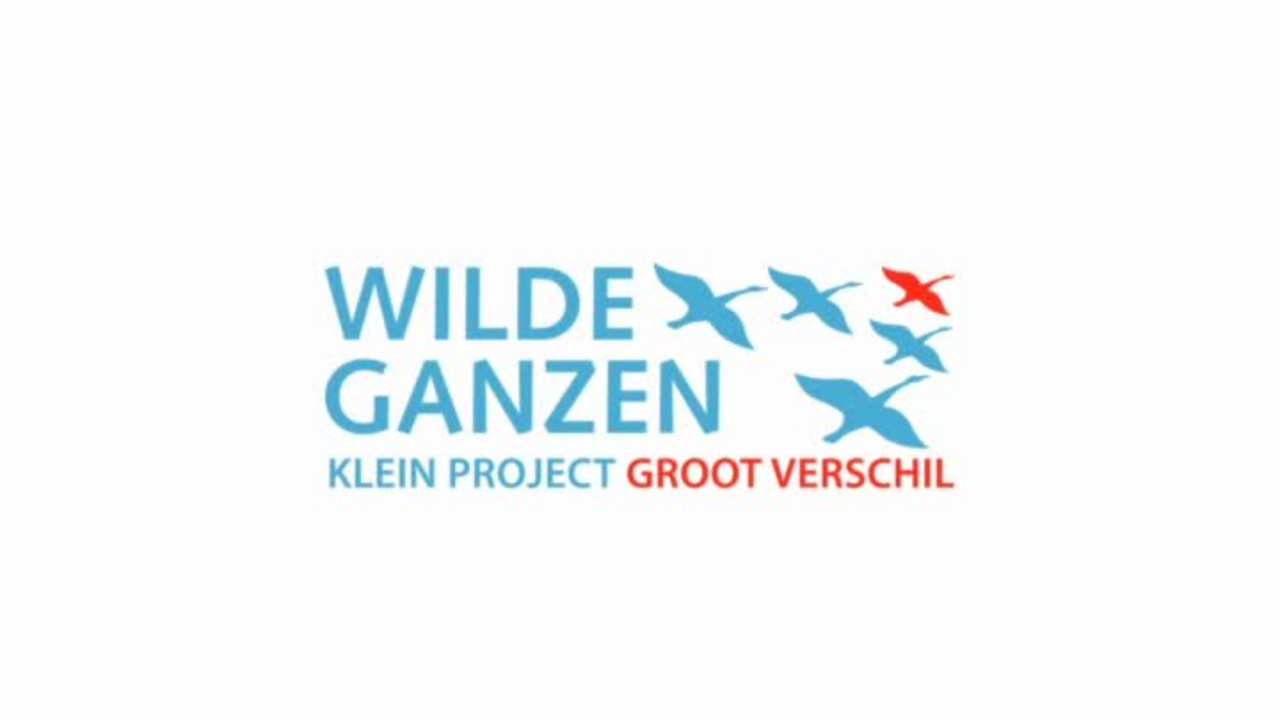 Wilde Ganzen - India