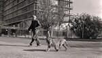 Er zijn geen leeuwen in Tel Aviv