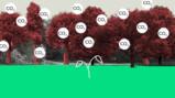 Hoe groen is biomassa?
