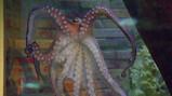Hoe beweegt een octopus?