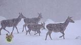 Hoe bereiden dieren zich voor op de winter?: Eekhoorns, vleermuizen en herten