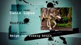 Hoe vind je een wolf?: Zoeken naar poep en pootafdrukken in het bos