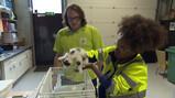 Wat doet de dierenambulance?: Vrijwilligers die dieren redden en verplegen