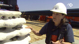 Nieuwsuur in de klas: Ruimte voor oesters in de Noordzee