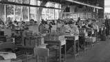 Nederland industrialiseert in de jaren 50
