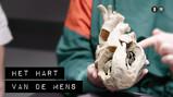 De Binnendienst: Het hart van een mens