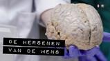 De Binnendienst: De hersenen van een mens
