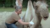 Wat doet een dierenarts in een dierentuin?