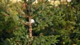 Wat is een duurzame kerstboom?