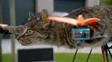 De vliegende kat als kunstobject
