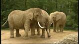 Hoe weeg je een olifant?