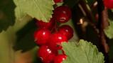 Fruit verbouwen