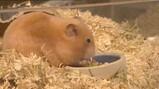 Wat is hamsteren?