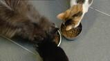 Waarom geeft een kat kopjes?