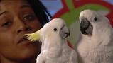 Hoe verzorg je een papegaai?