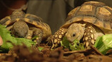 Kan een schildpad zonder schild?