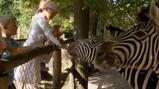 De strepen van de zebra