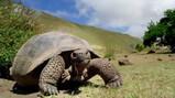 Galapagos in de klas: Evolutie
