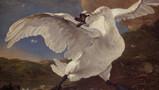 Topstukken van het Rijksmuseum: De bedreigde zwaan van Jan Asselijn