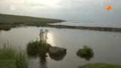 Wildernis onder water