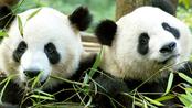 Welkom Wu Wen & Xing Ya Welkom Wu Wen & Xing Ya