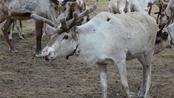 Droomhuis gezocht! Lapland