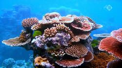 Klimaatjagers in de klas: Het verdwijnen van koraal in Oceanië