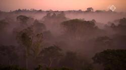 Klimaatjagers in de klas: Verdroging van het Amazone-regenwoud